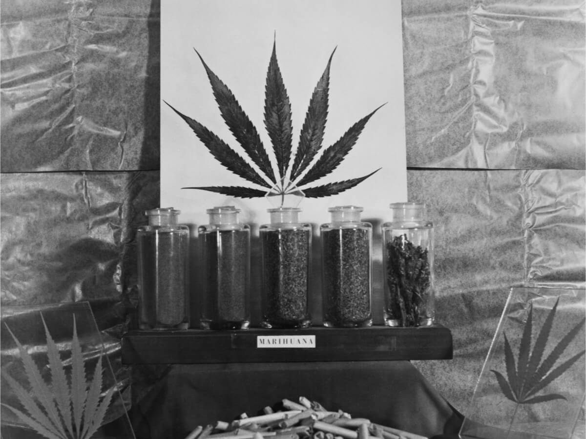 Medical Marijuana History And How It Can Help People Today