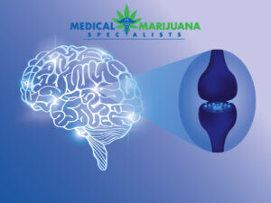 The Endocannabinoid System and Its Lost Benefits